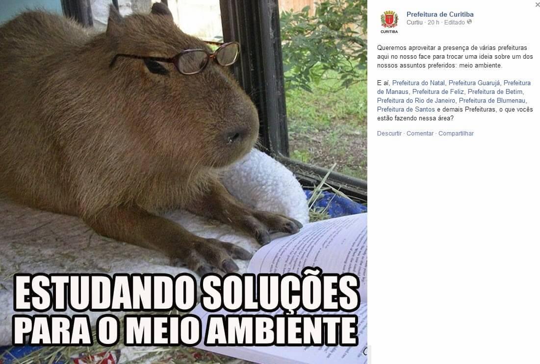 curitiba_capivara